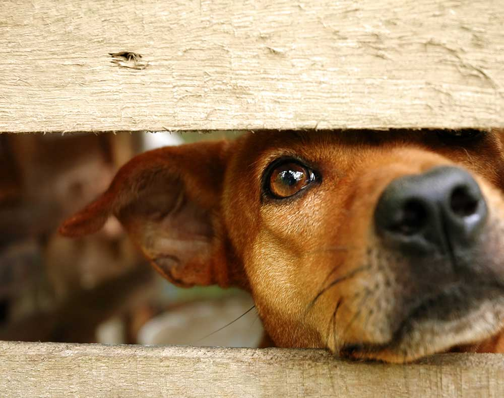 Animal Welfare Advocates