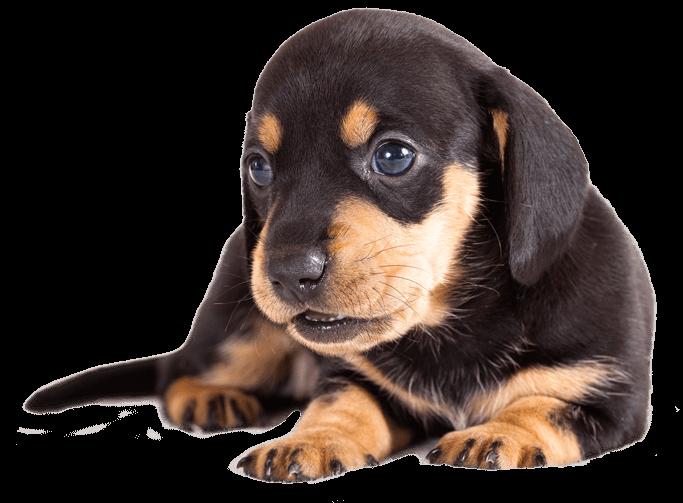 canine welfare efforts